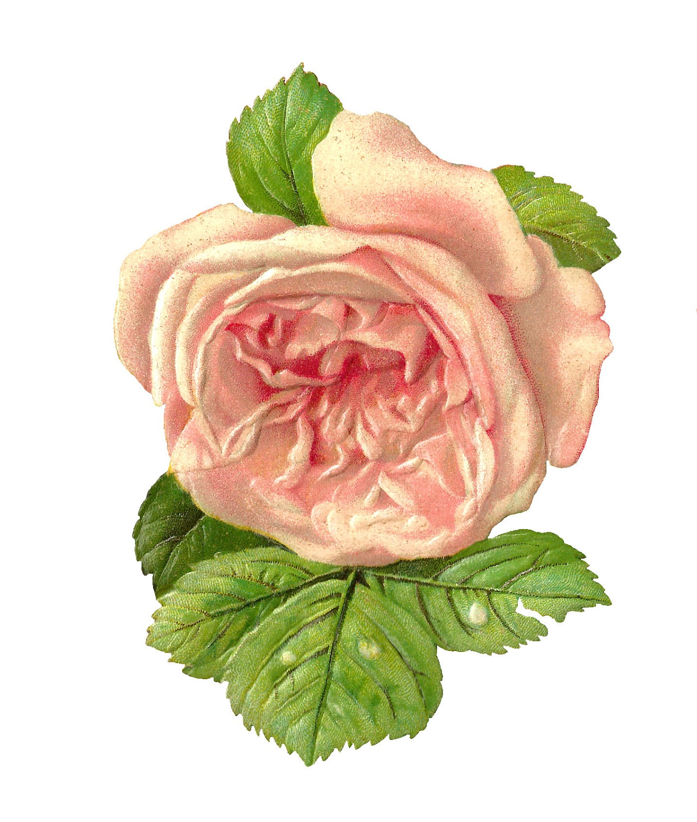 Free Scrapbook Paper Pink Rose
