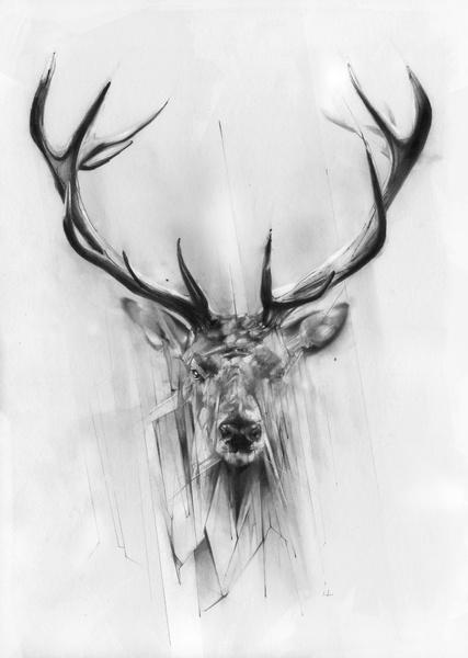 6 Images of Deer Drawings Printables