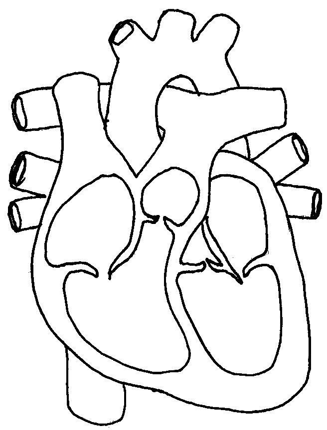 4 Images of Human Heart Printable