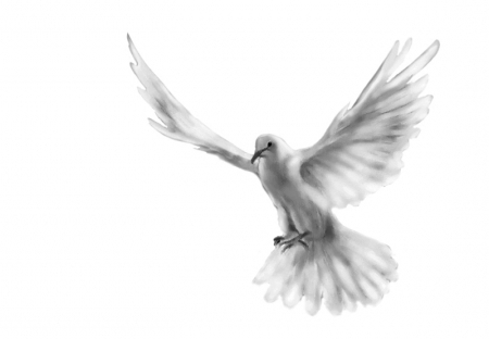 6 Images of Dove Printable Complete The Drawing