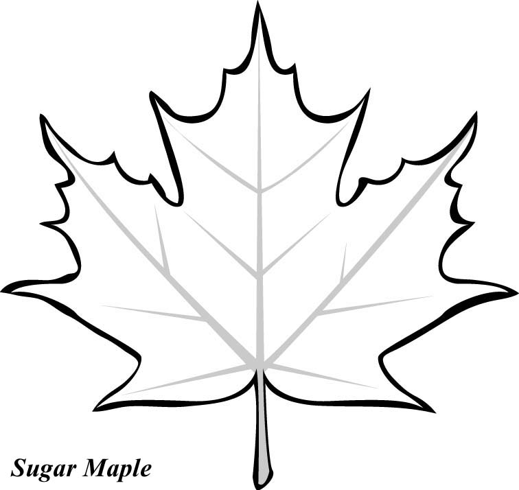 6 Images of Leaf Tracers Printable