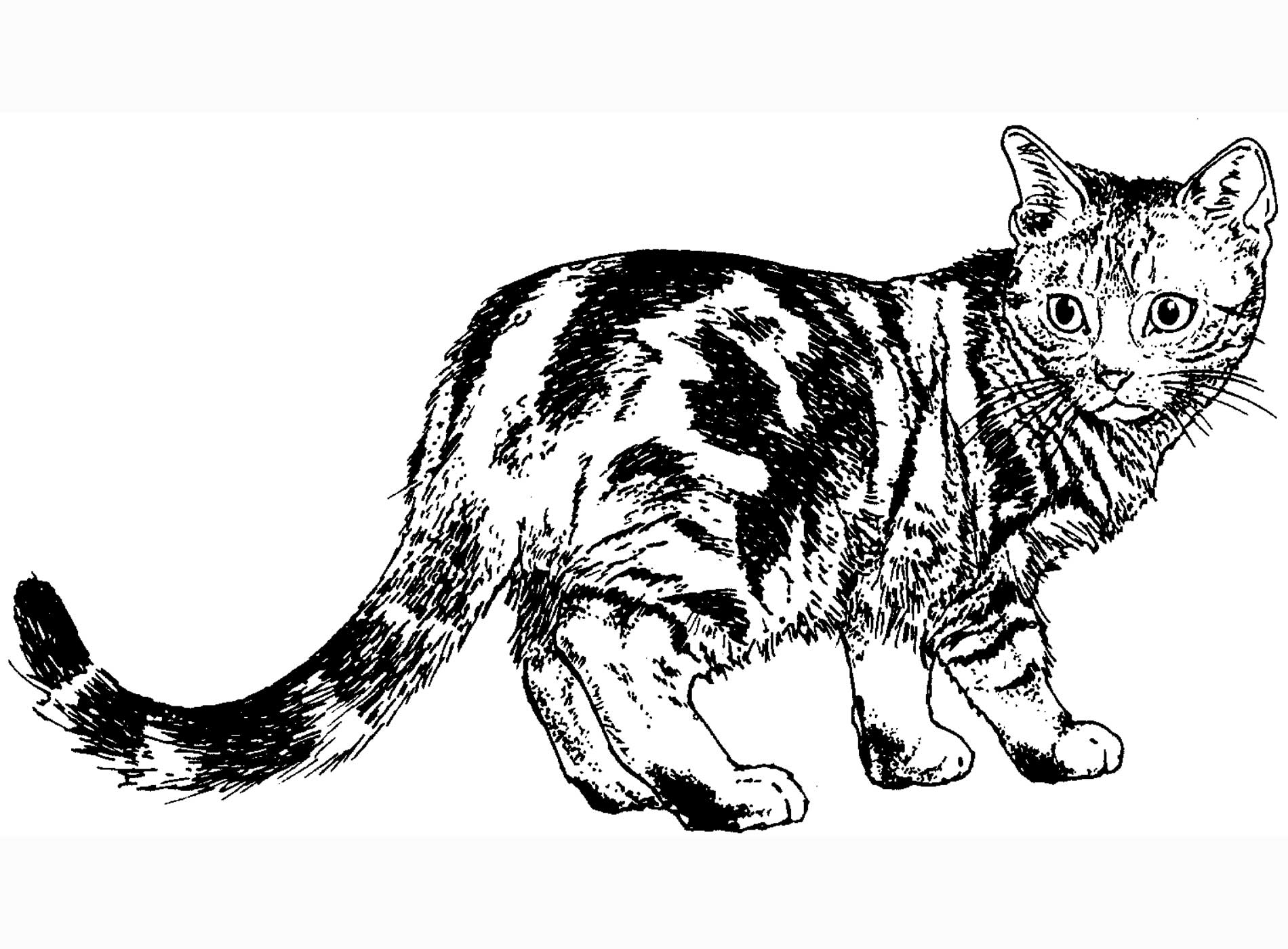4 Images of Realistic Cat Coloring Pages Printable
