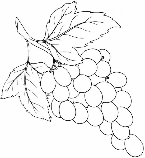 4 Images of Grapes Template Printable