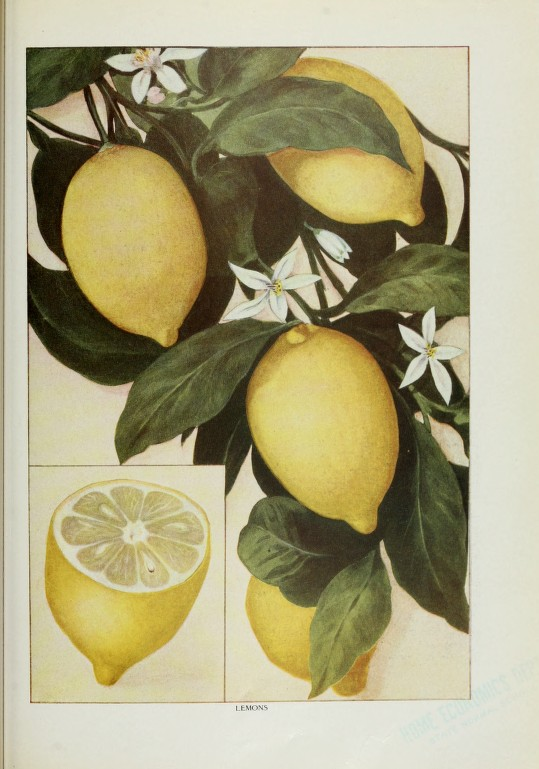7 Images of Printable Vintage Tags With Lemons
