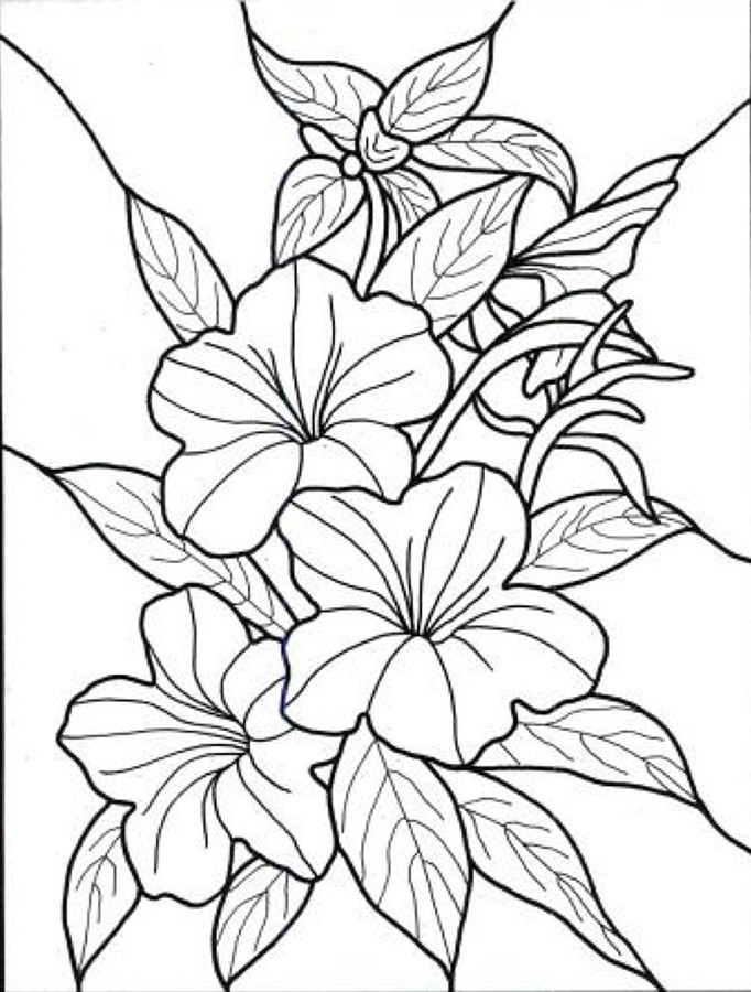 Exotic Flower Coloring Pages