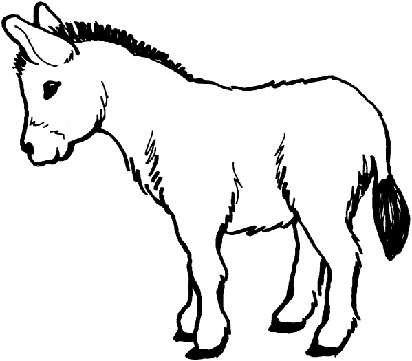 4 Images of Printable Picture Of A Donkey