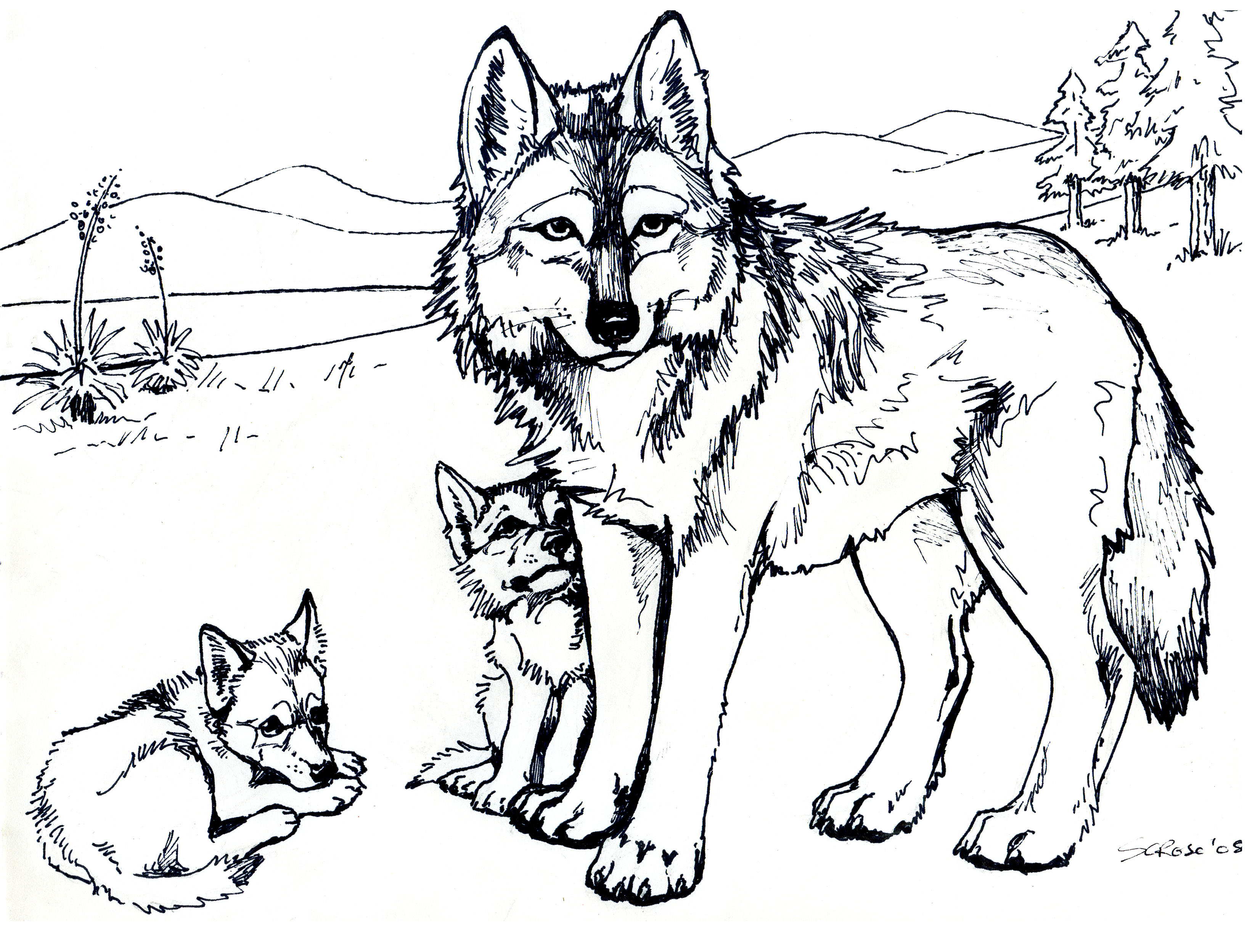 5 Images of Wolves Coloring Pages Printable