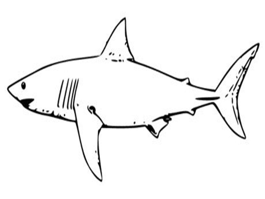 4 Images of Shark Printable Coloring Pages