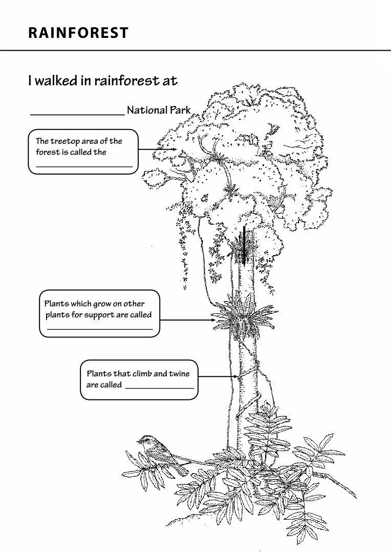 1st Grade Rainforest Worksheets