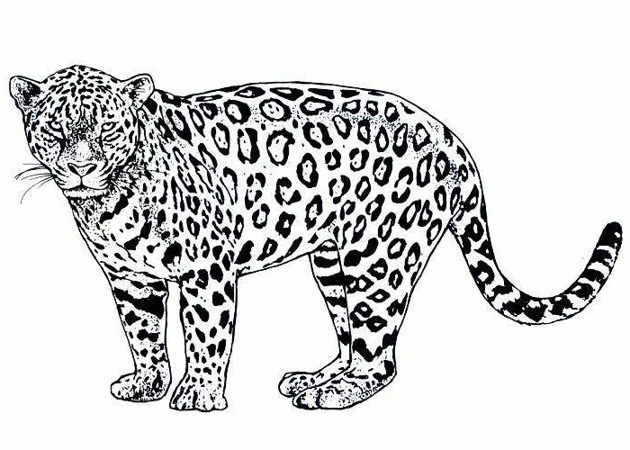 4 Images of Cheetah Free Printable Bookmarks