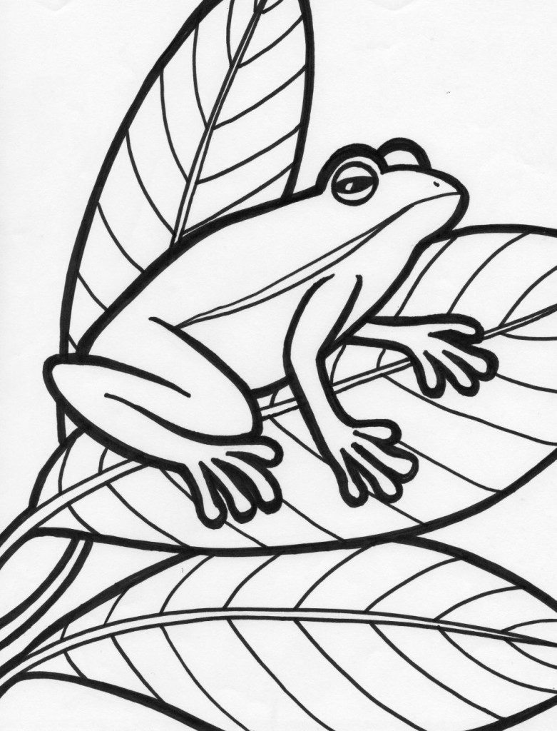 6 Images of Printable Adult Coloring Pages Frogs