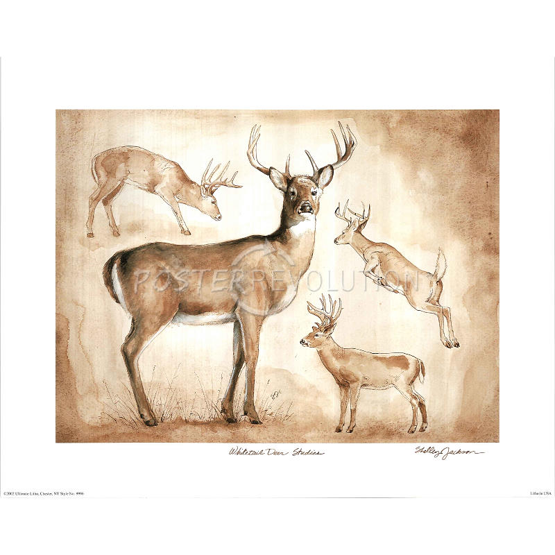 4 best images of family deer sketches printable