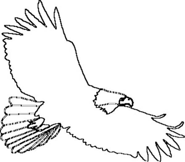 4 best images of eagle outline printable bald eagle for Eagle coloring pages