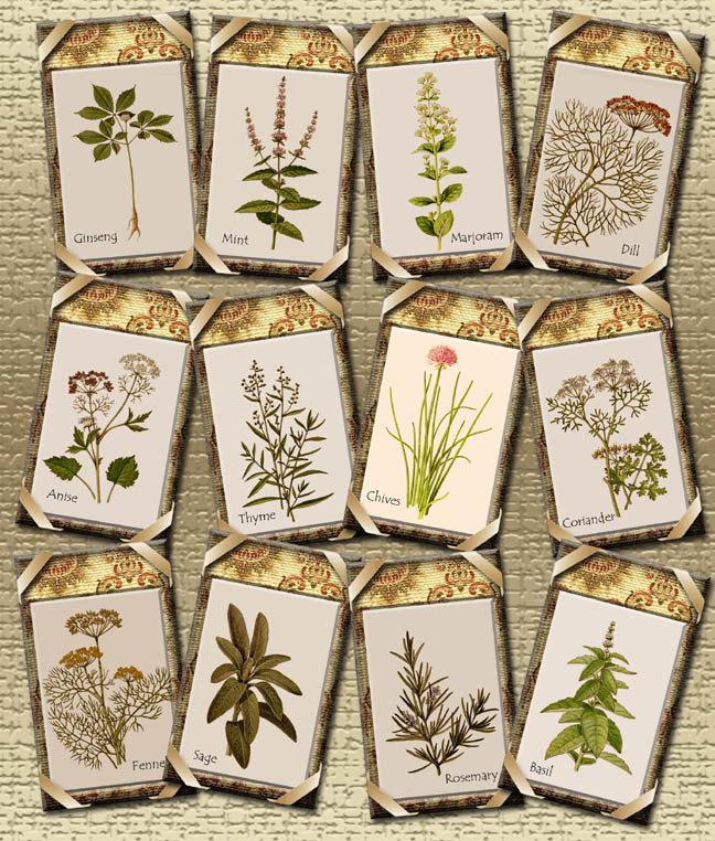 6 Images of Printable Herb Labels