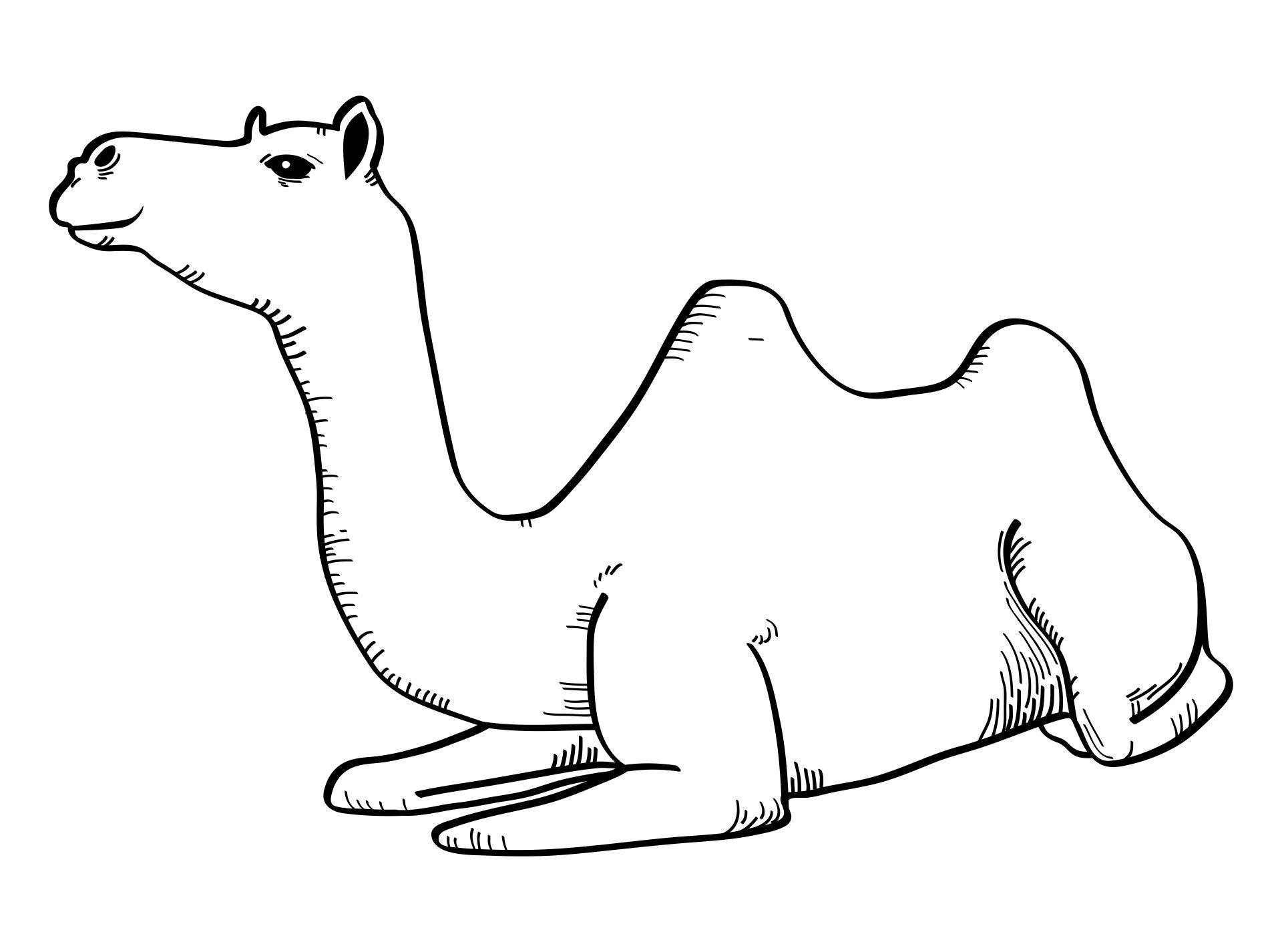 8 Images of Desert Coloring Pages Printable