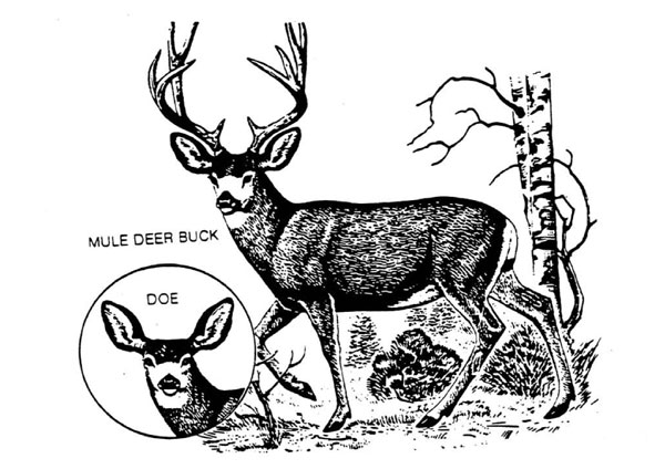 4 Images of Free Printable Wildlife