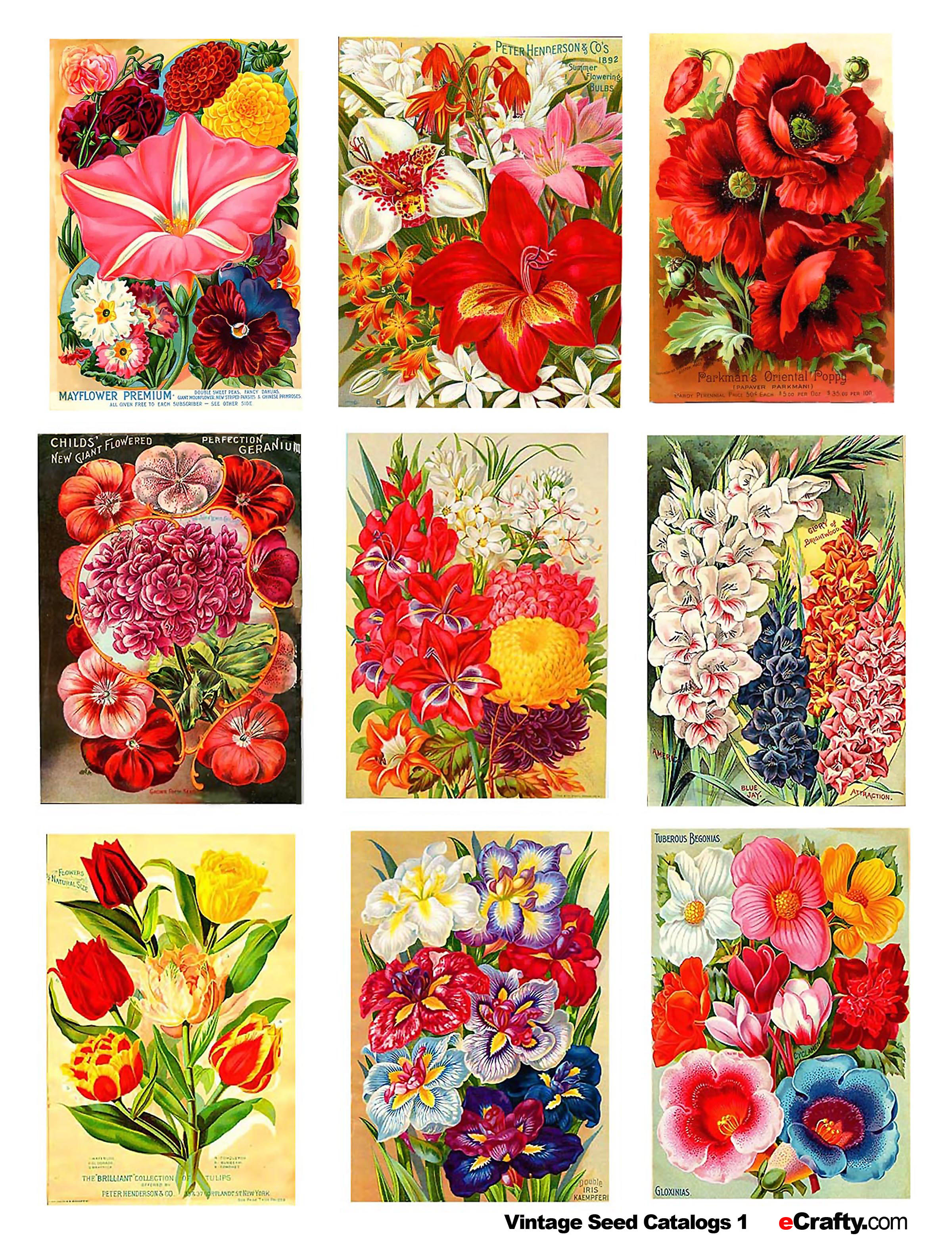 7 Images of Flower Seed Packets Printable